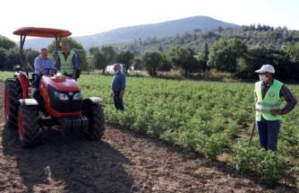 Muğla'da, Menteşe Belediyesi'nin Diktiği Ata Tohumları Filizlendi