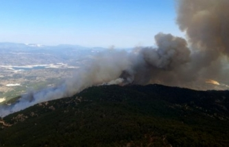 Aydın'daki Yangınla İlgili 2 Kişi Gözaltına Alındı