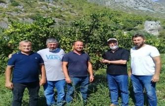 Bitki Besleme ve Akdeniz Sineği Zararlısına Dikkat