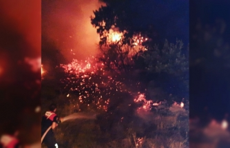 Bodrum'da Atılan Sigara İzmariti Yangın Çıkardı