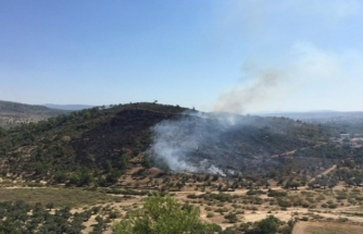 Milas'ta Çıkan Yangın Hızla Kontrol Altına Alındı