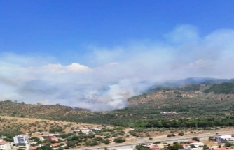 Milas'ta Zeytinlik Alanda Yangın Çıktı!