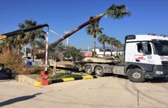 Muğla Büyükşehir'den Ağaç Hassasiyeti
