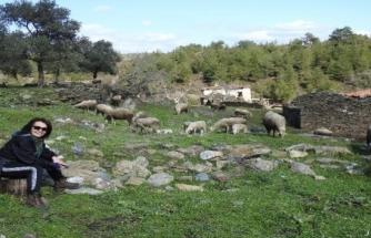 Yatağan'da 2 Asırlık Meyistan Köyü Koyunlara Kaldı
