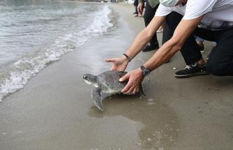 Dalyan'da DEKAMER Tarafından Tedaviye Alınan Yavru Kaplumbağa Doğaya Salındı