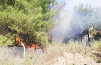 İskenderun'da Peş Peşe Orman Yangınları!