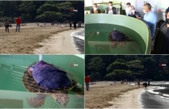 İztuzu Plajı'nda Bu Yıl Caretta Caretta Yuva Sayısı Rekor Kırdı!