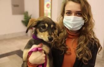 Bodrum'da Terk Edilen Üç Köpeğe Hayvanseverler Sahip Çıktı