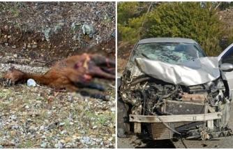 Datça'da Atla Çarpışan Araç Hurdaya Döndü, Sürücü Ağır Yaralandı