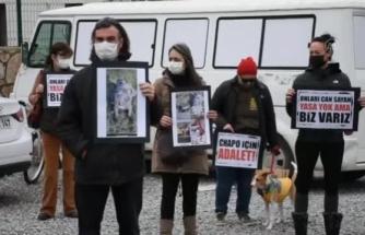 Genç Kıza Saldırdığı İleri Sürülen Köpeğin Kamyonetle Ezilmesi Protesto Edildi