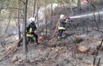 Fethiye'de Çıkan Orman Yangınında 2 Dönüm Alan Zarar Gördü