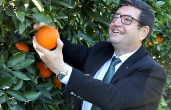 Köyceğiz Portakalının Farklılıkları Raporlandı