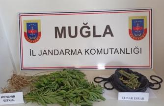 Ula'nın Gökova Mahallesi'nde Uyuşturucu Operasyonu