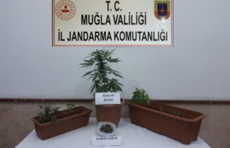 Bodrum'da Uyuşturucu Operasyonunda Bir Şüpheli Yakalandı