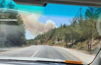 Milas'ta Çıkan Orman Yangınına Müdahale Ediliyor