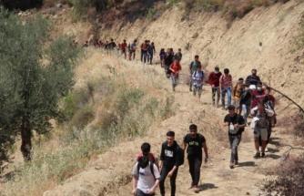 Seydikemer'de, Ormanlık Alanda 74 Düzensiz Göçmen Yakalandı