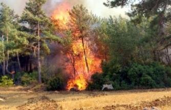 Balta Girmemiş Fesleğen Ormanları Alevlere Teslim!