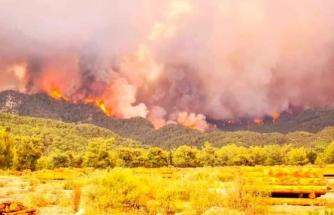 Muğla'da Artan Sıcaklarla Beraber Alevler Yeniden Yükseliyor