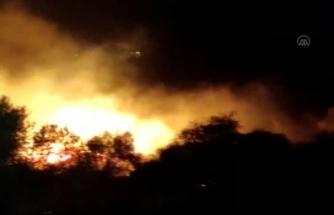 Bodrum'da Tarım Arazisi ve Makilik Alanda Yangın Çıktı