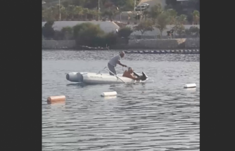 Bodrum'da Yakalanan Köpek Balığı Deniz Açığına Bırakıldı