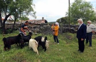 Muğla Büyükşehir Kıl Keçisi Dağıtımını Sürdürüyor