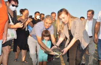 Ortaca'da Uydu Takip Cihazı Takılan 3 Caretta Caretta Denize Salındı