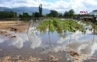 Menteşe'de Tarım Arazilerini Su Bastı, Hayvanlar Canından Oldu