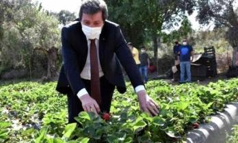 Muğla'da Çilek, Kırsal Ailelerin Geçim Kaynağı Oldu
