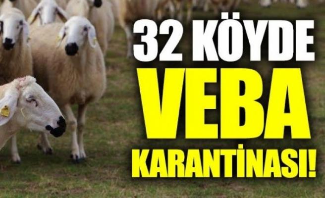 BAKANLIĞIN VERDİĞİ KOYUNLAR VEBADAN ÖLDÜ: 32 MAHALLE KARANTİNADA