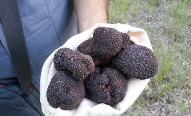 """""""Siyah Elmas""""ta Köylüye Yüzde 65 Teşvik Geliyor!"""