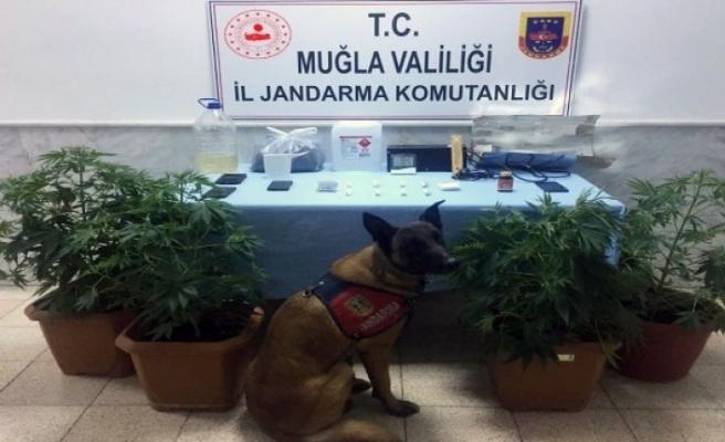 """Uyuşturucu Operasyonlarına """"Kaptan"""" Damga Vurdu"""