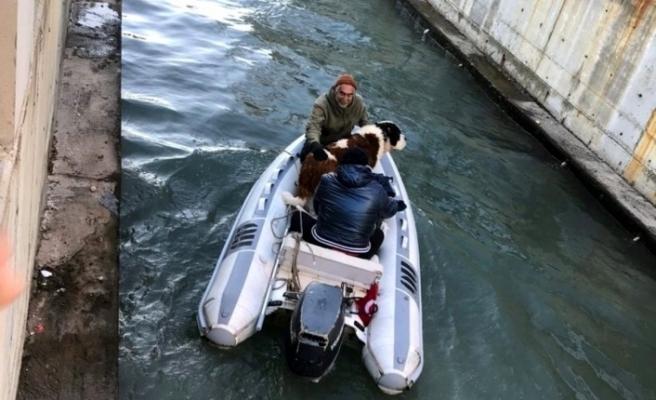 Marmaris'te Dereye Düşen Köpeği İtfaiye Kurtardı!