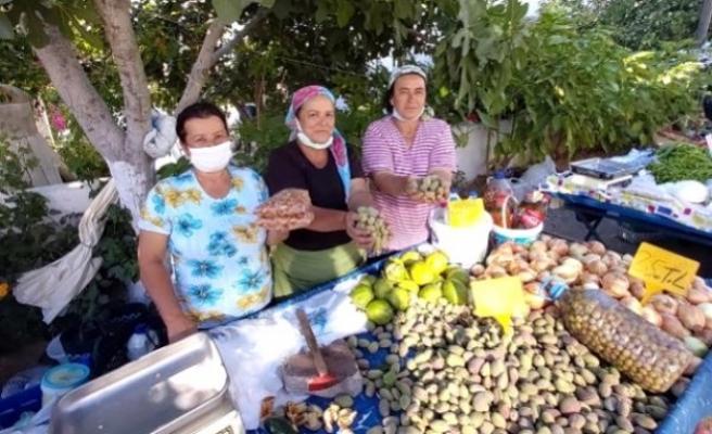 Datça'da Taze Badem Hasadı Başladı