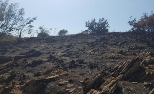 Milas'ta Çıkan Yangında Ağaçlar Zarar Gördü