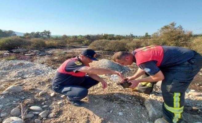 Seydikemer'de Alevlerin Arasında Kalan Kaplumbağa Kurtarıldı