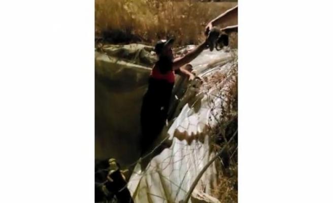Seydikemer'de Havuza Düşen Köpek Yavruları Kurtarıldı