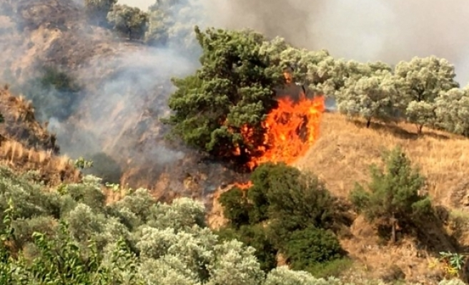 Aydın'daki Yangını Söndürme Çalışmaları Devam Ediyor