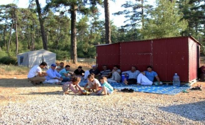 Gezgin Arıcılar Çam Balı için Muğla'ya Geliyor