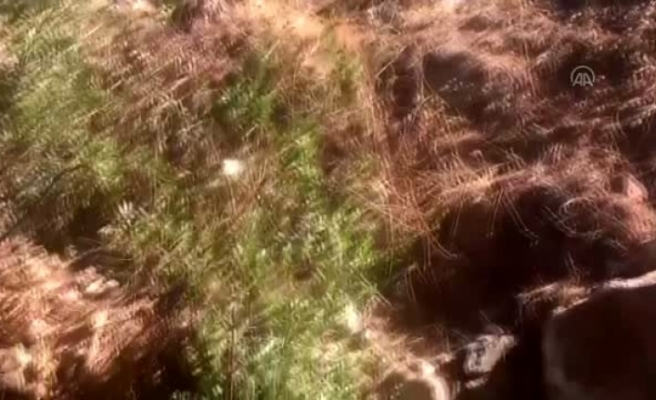 Bodrum'da Atık Suyun Doğaya Boşaltıldığı İddiası
