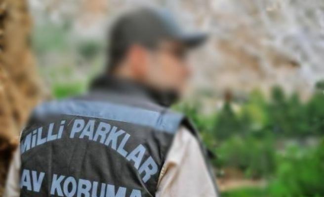 Bodrum'da Av Koruma Memuruna Mukavemet: 1 Gözaltı