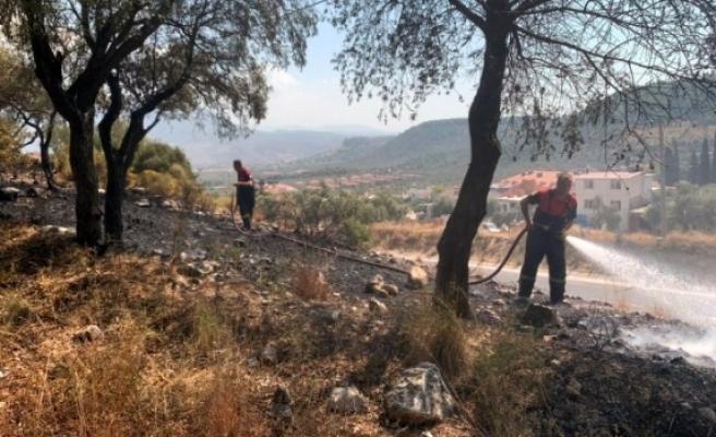 Milas'ta Otluk Alanda Başlayan Yangın Söndürüldü