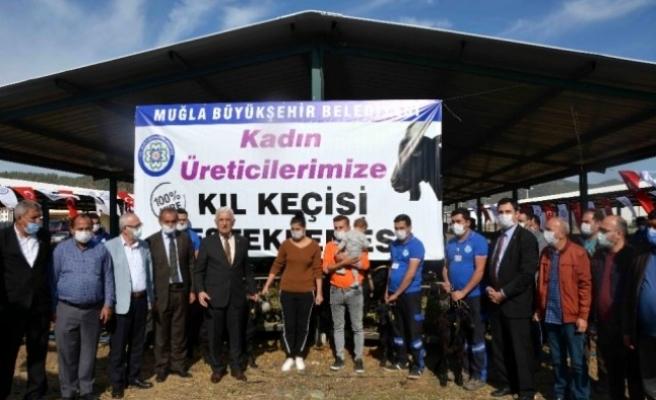 Muğla Büyükşehir Belediyesi Ortaca'da Kıl Keçisi Dağıttı
