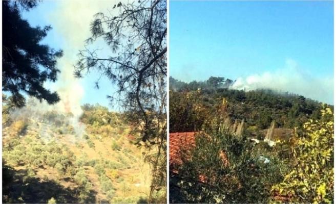 Muğla'da Alevler, 1 Dönüm Zeytinliği Küle Çevirdi