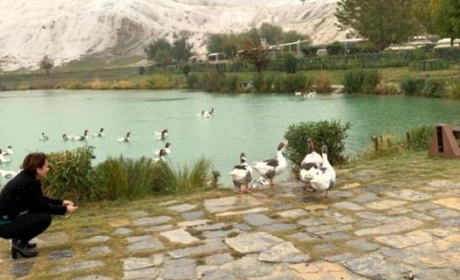 Muğla'da Turizm İçin Kaplıca Araştırması
