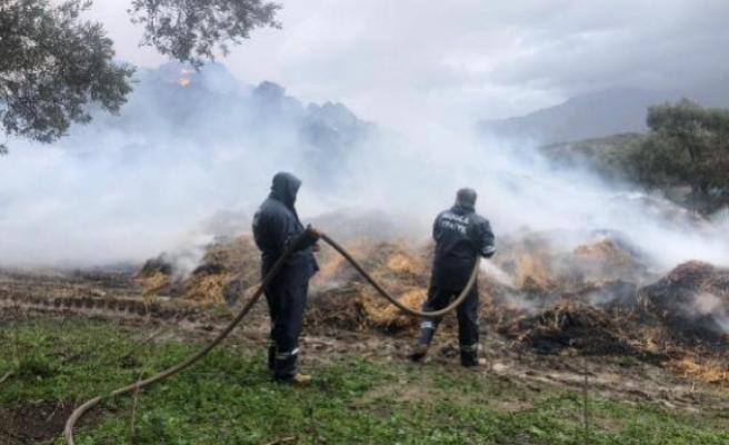 Milas'taki Bir Samanlıkta Çıkan Yangın Zeytin Ağaçlarına Sıçradı