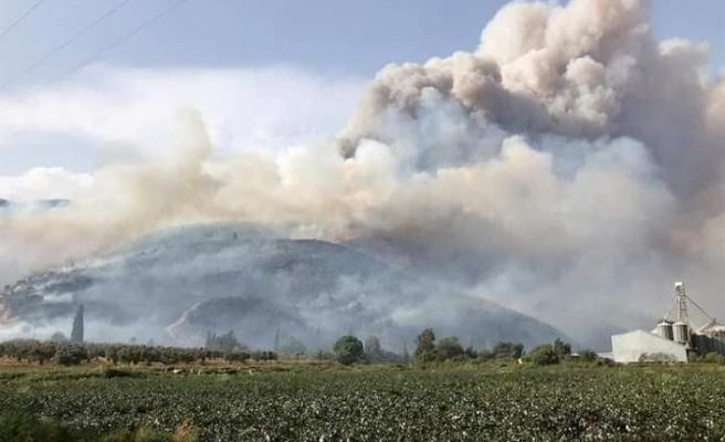 Muğla'da, 2020 Yılında 813 Hektar Ormanlık Alan Yandı