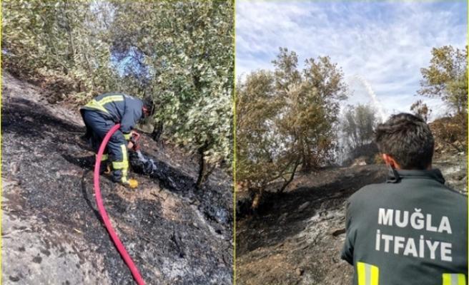 Dalaman'daki Zeytinlik Alanda Çıkan Yangında 70 Ağaç Zarar Gördü