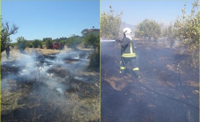Fethiye'de Çıkan Yangında Limon Ağaçları Zarar Gördü