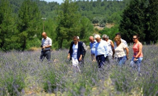 Muğla'da Büyükşehir 97 Bin 599 Aromatik Bitki Dağıttı