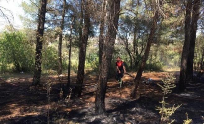 Yatağan'da Çıkan Yangında Zeytin ve Kızılçam Ağaçları Zarar Gördü